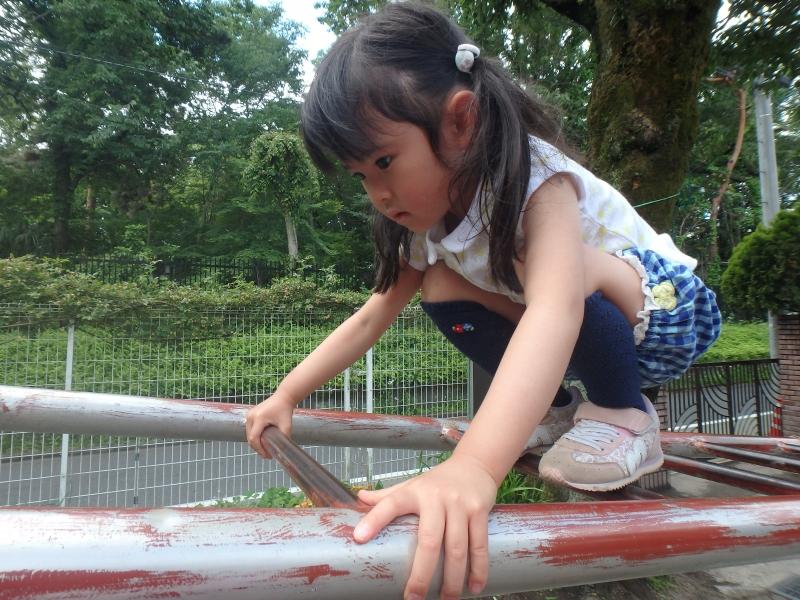 すみれ-2016年5月
