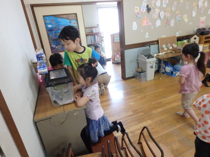 すみれ-2015年5月