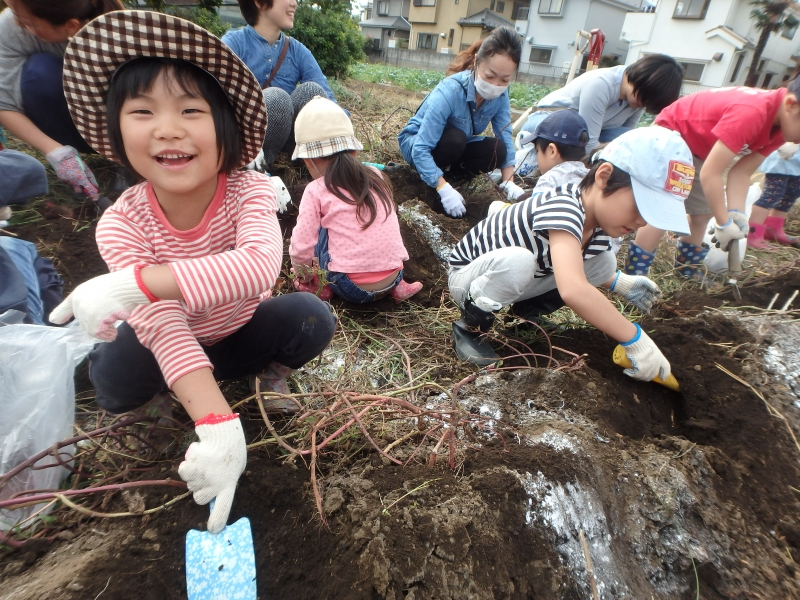 2016年度芋掘り遠足-ひばり