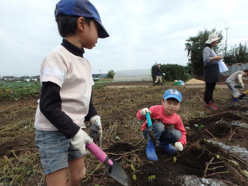 2015年度ひばり芋掘り遠足