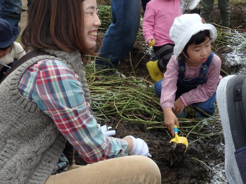 2015年度芋掘り遠足-ゆり