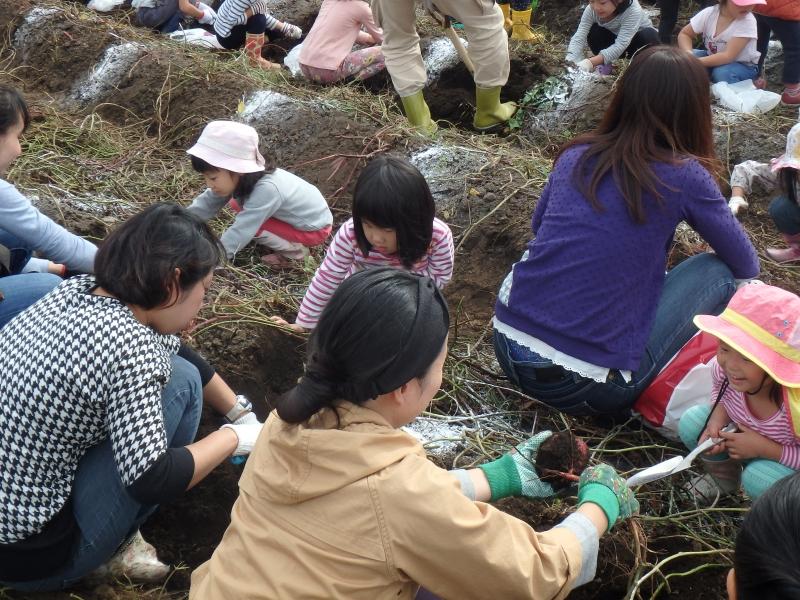 2017年度ひばり芋掘り遠足